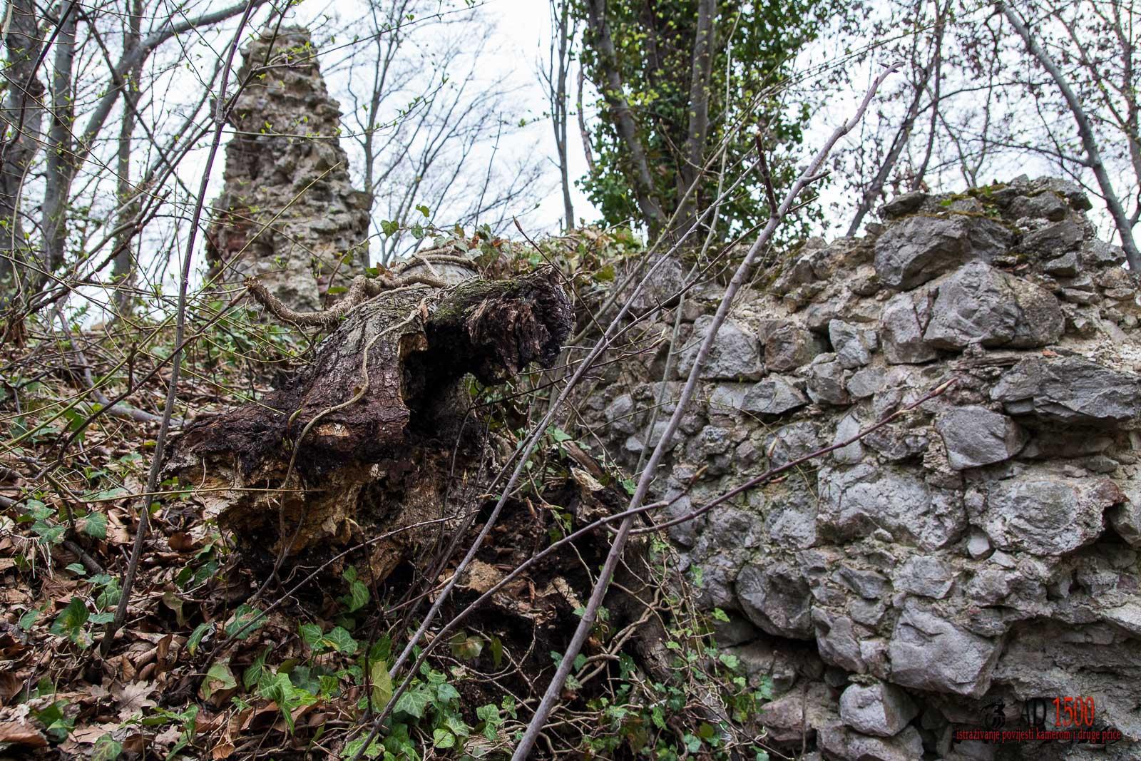 Drvo prevaljeno preko ostataka sjevernog zida